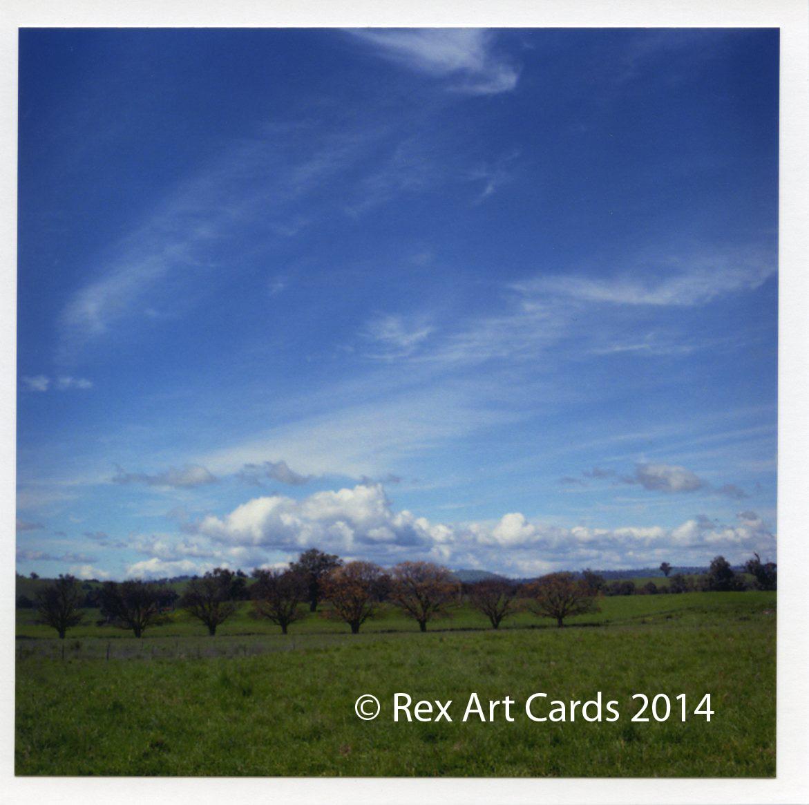 Original Photo Greeting Cards Rex Art Cards